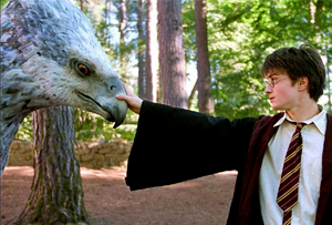 harry potter Animales fantásticos y dónde encontrarlos